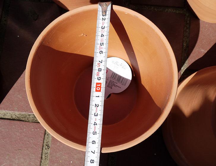 ダイソーに素焼植木鉢-約17cmの在庫が久々にあったので買って来た3.jpg