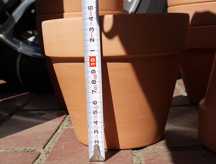 ダイソーに素焼植木鉢-約17cmの在庫が久々にあったので買って来た4.jpg