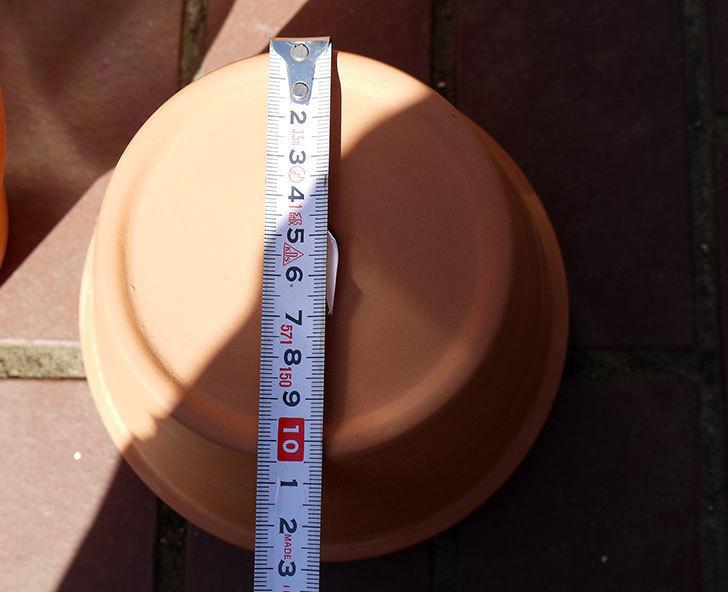 ダイソーに素焼植木鉢-約17cmの在庫が久々にあったので買って来た5.jpg