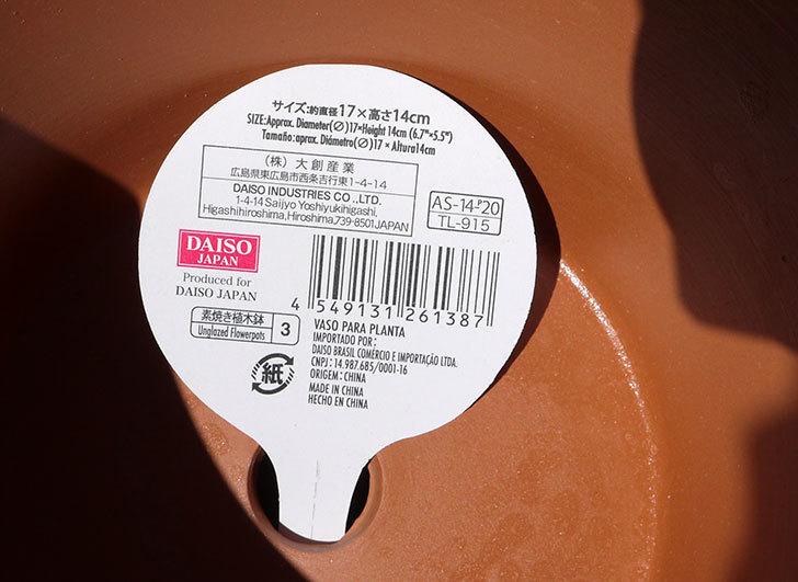 ダイソーに素焼植木鉢-約17cmの在庫が久々にあったので買って来た6.jpg