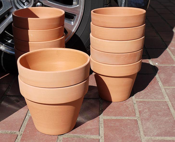 ダイソーに素焼植木鉢-約17cmの在庫が久々にあったので買って来た7.jpg