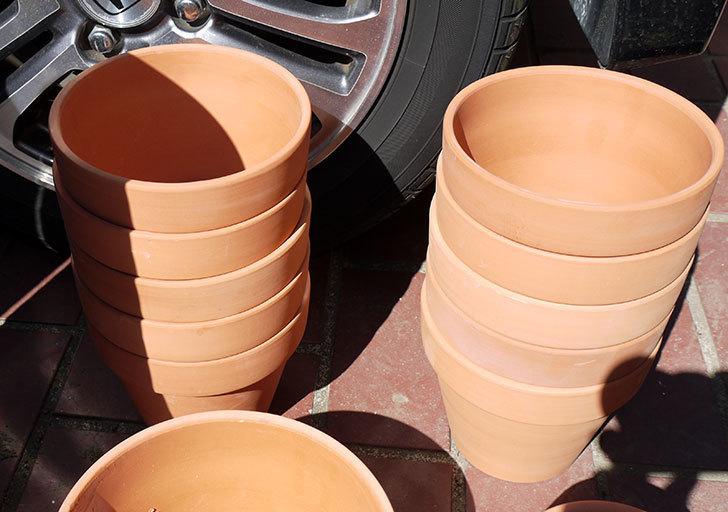ダイソーに素焼植木鉢-約17cmの在庫が久々にあったので買って来た8.jpg
