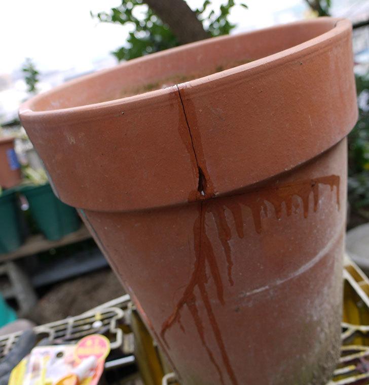 ダイソーの木工陶磁器用-強力瞬間接着剤で植木鉢のヒビを修理した1.jpg