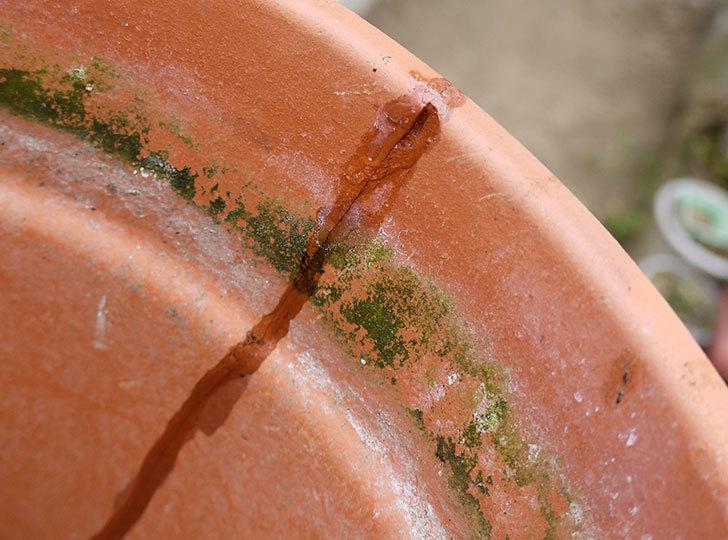 ダイソーの木工陶磁器用-強力瞬間接着剤で植木鉢のヒビを修理した12.jpg