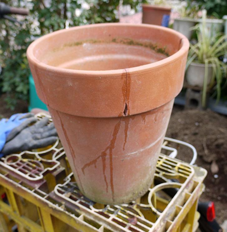 ダイソーの木工陶磁器用-強力瞬間接着剤で植木鉢のヒビを修理した2.jpg