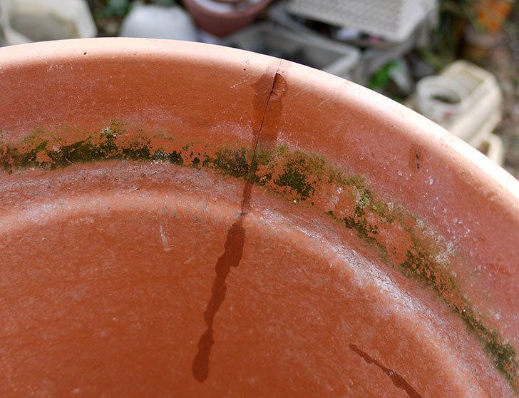ダイソーの木工陶磁器用-強力瞬間接着剤で植木鉢のヒビを修理した4.jpg