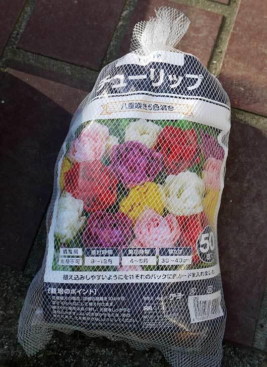 チューリップ-八重咲き5色混合-50個入りの球根をケイヨーデイツーで買って来た。2015年-1.jpg