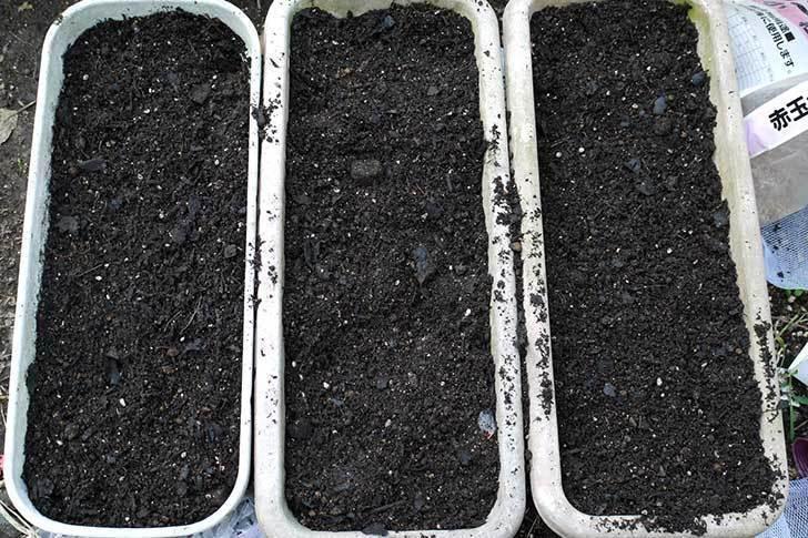 チューリップ-八重咲き5色混合-50個入りの球根をケイヨーデイツーで買って来た。2015年-3.jpg