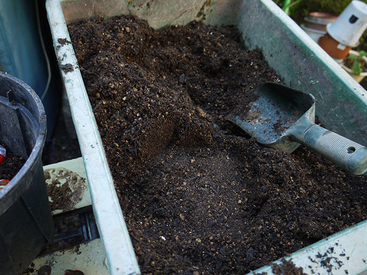 チューリップの球根をスリット鉢に植えた。2016年-3.jpg