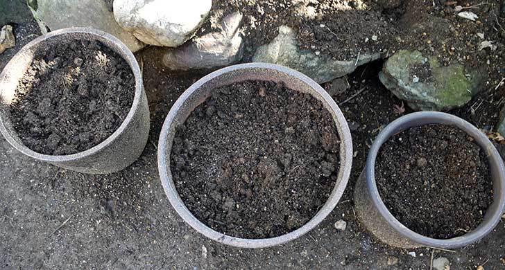 チューリップの球根を植えた6.jpg