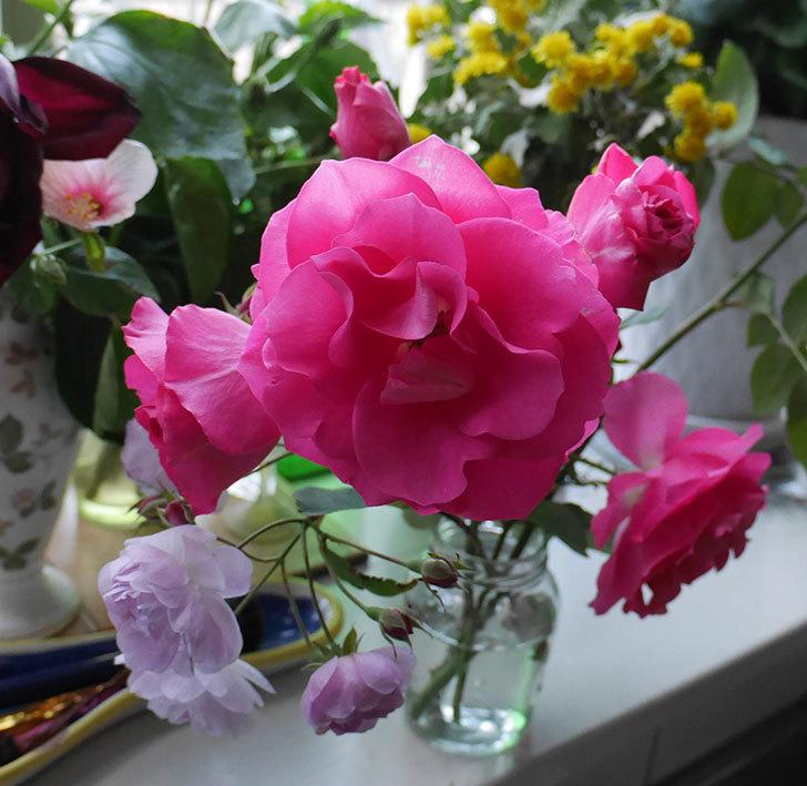 ツルうらら(ツルバラ)の秋花を切り花にした。2017年-2.jpg