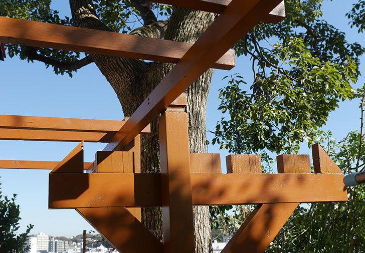 ツルバラの誘引を解いてパーゴラと物干し台に木部保護塗料を塗った(1)。2019年-10.jpg