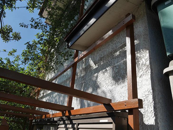 ツルバラの誘引を解いてパーゴラと物干し台に木部保護塗料を塗った(1)。2019年-2.jpg