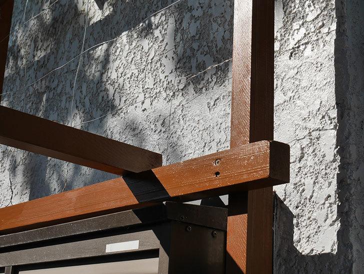 ツルバラの誘引を解いてパーゴラと物干し台に木部保護塗料を塗った(1)。2019年-3.jpg