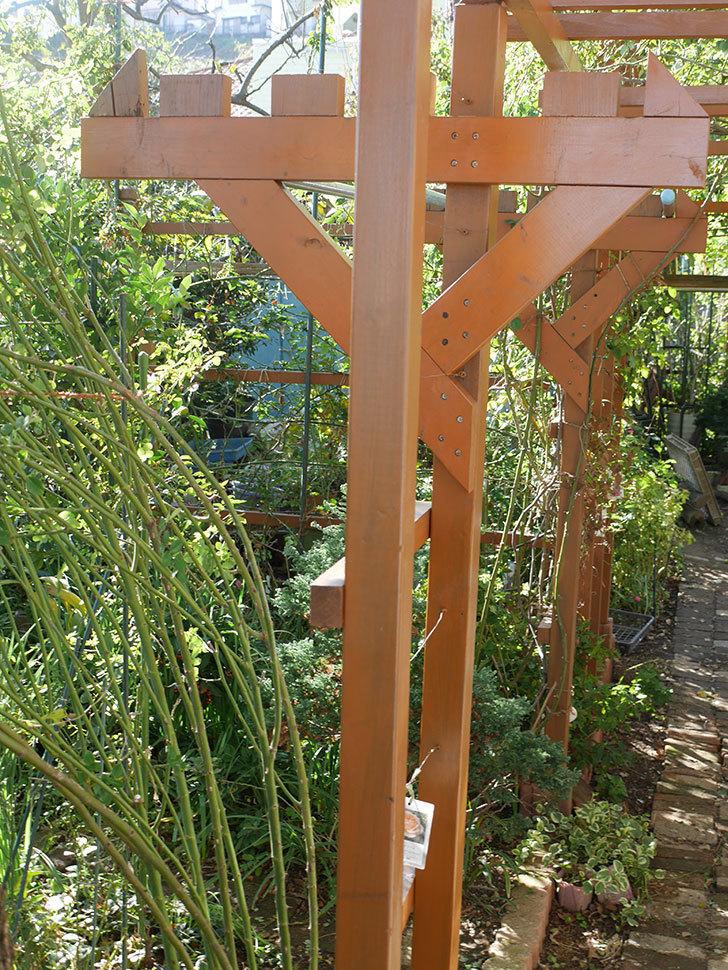 ツルバラの誘引を解いてパーゴラと物干し台に木部保護塗料を塗った(1)。2019年-4.jpg