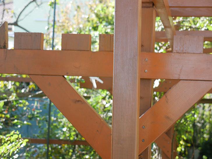 ツルバラの誘引を解いてパーゴラと物干し台に木部保護塗料を塗った(1)。2019年-5.jpg