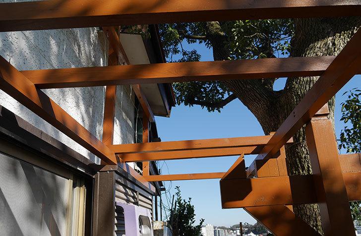 ツルバラの誘引を解いてパーゴラと物干し台に木部保護塗料を塗った(1)。2019年-8.jpg