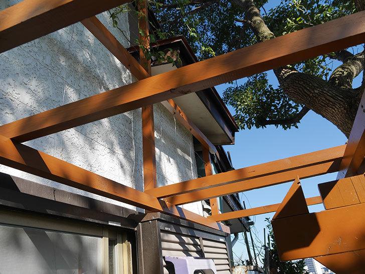 ツルバラの誘引を解いてパーゴラと物干し台に木部保護塗料を塗った(1)。2019年-9.jpg