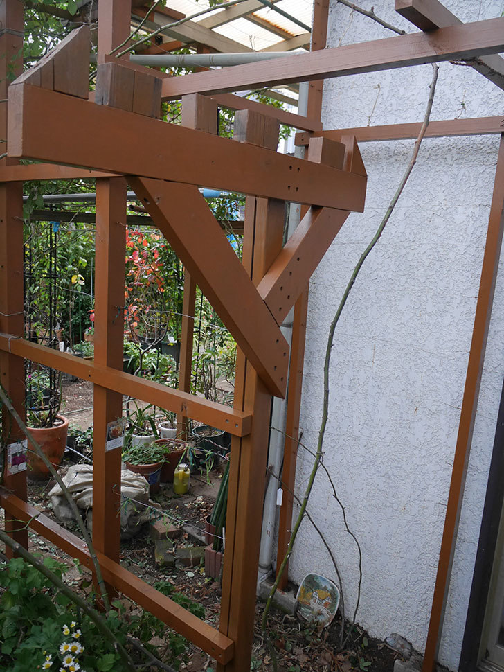 ツルバラの誘引を解いてパーゴラと物干し台に木部保護塗料を塗った(2)。2019年-1.jpg
