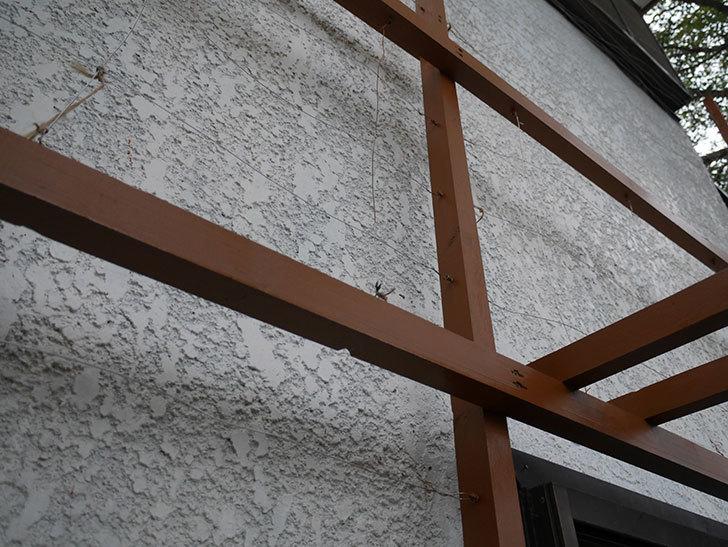 ツルバラの誘引を解いてパーゴラと物干し台に木部保護塗料を塗った(2)。2019年-5.jpg