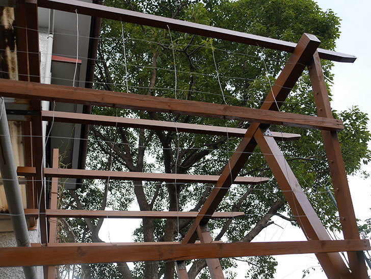 ツルバラの誘引を解いてパーゴラと物干し台に木部保護塗料を塗った(3)。2019年-1.jpg