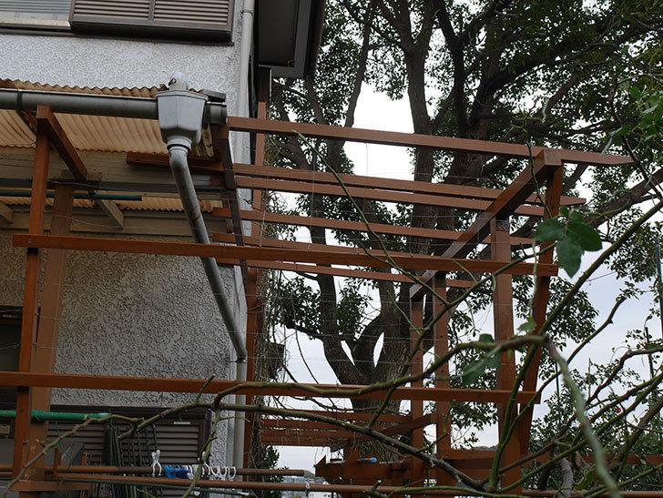 ツルバラの誘引を解いてパーゴラと物干し台に木部保護塗料を塗った(3)。2019年-2.jpg