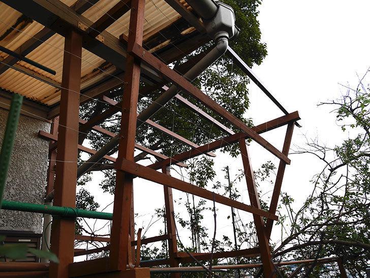 ツルバラの誘引を解いてパーゴラと物干し台に木部保護塗料を塗った(3)。2019年-3.jpg