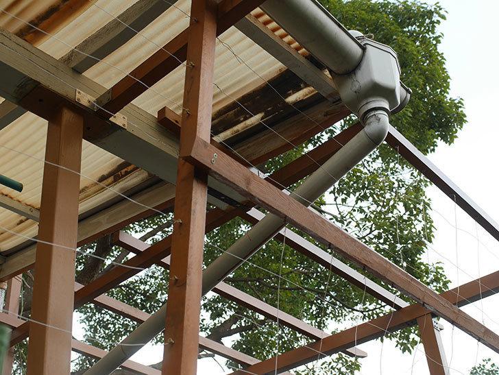 ツルバラの誘引を解いてパーゴラと物干し台に木部保護塗料を塗った(3)。2019年-4.jpg