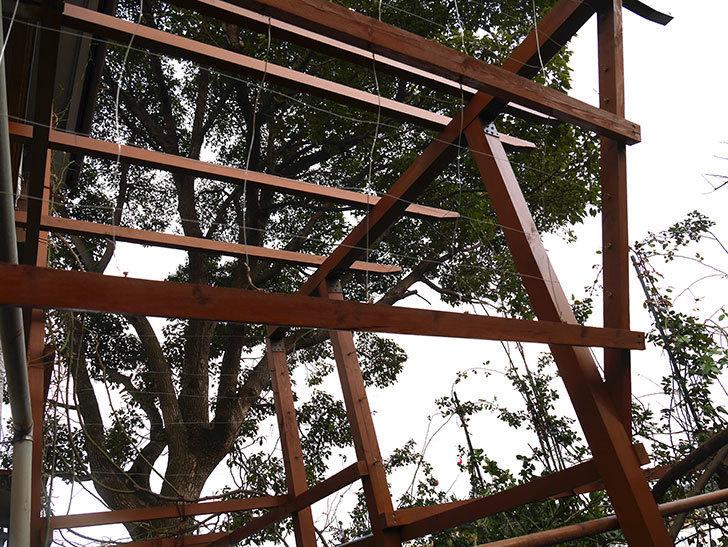 ツルバラの誘引を解いてパーゴラと物干し台に木部保護塗料を塗った(3)。2019年-5.jpg
