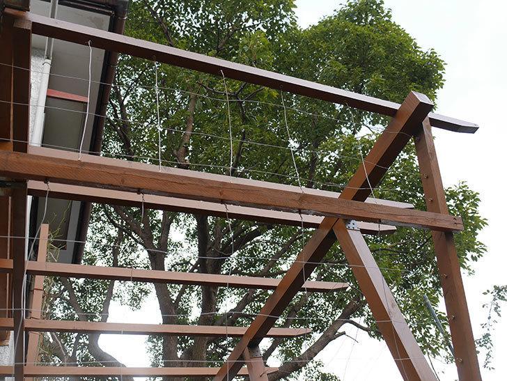 ツルバラの誘引を解いてパーゴラと物干し台に木部保護塗料を塗った(3)。2019年-6.jpg