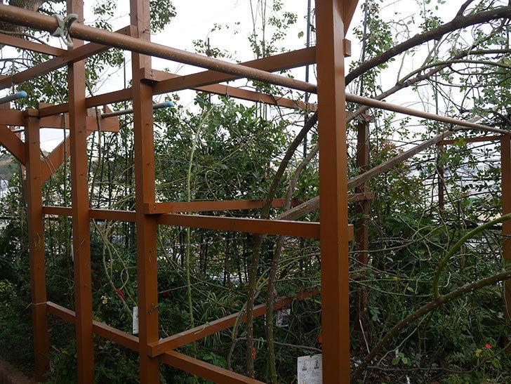 ツルバラの誘引を解いてパーゴラと物干し台に木部保護塗料を塗った(3)。2019年-8.jpg
