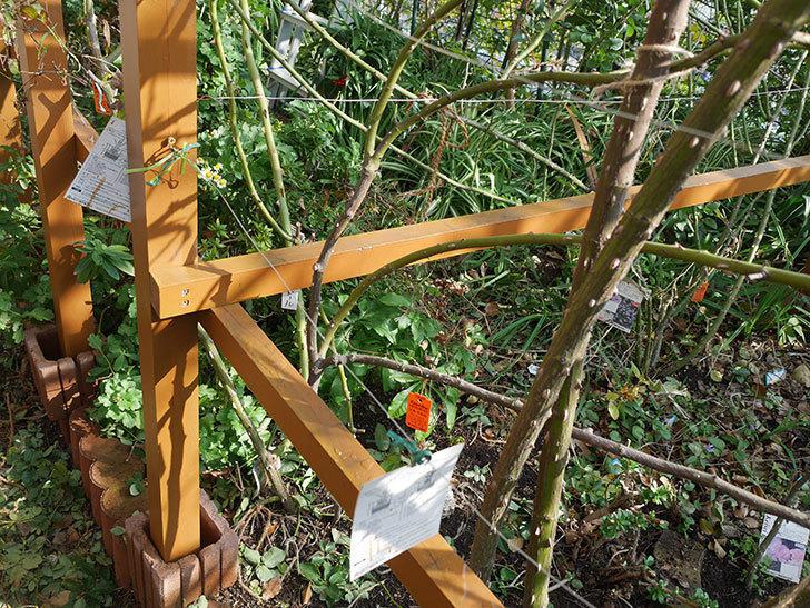 ツルバラの誘引を解いてパーゴラと物干し台に木部保護塗料を塗った(4)。2019年-1.jpg