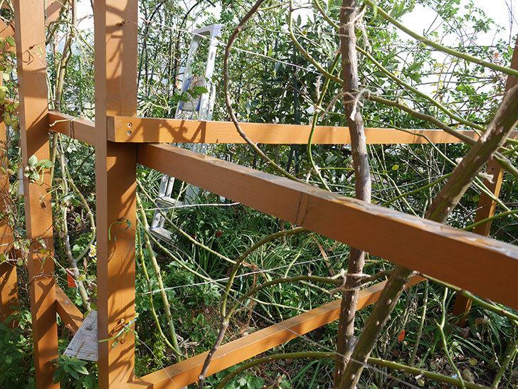 ツルバラの誘引を解いてパーゴラと物干し台に木部保護塗料を塗った(4)。2019年-2.jpg