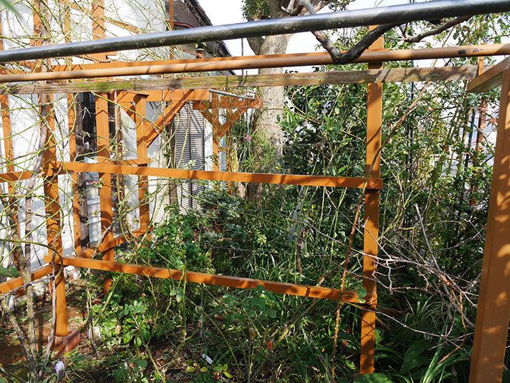 ツルバラの誘引を解いてパーゴラと物干し台に木部保護塗料を塗った(4)。2019年-8.jpg