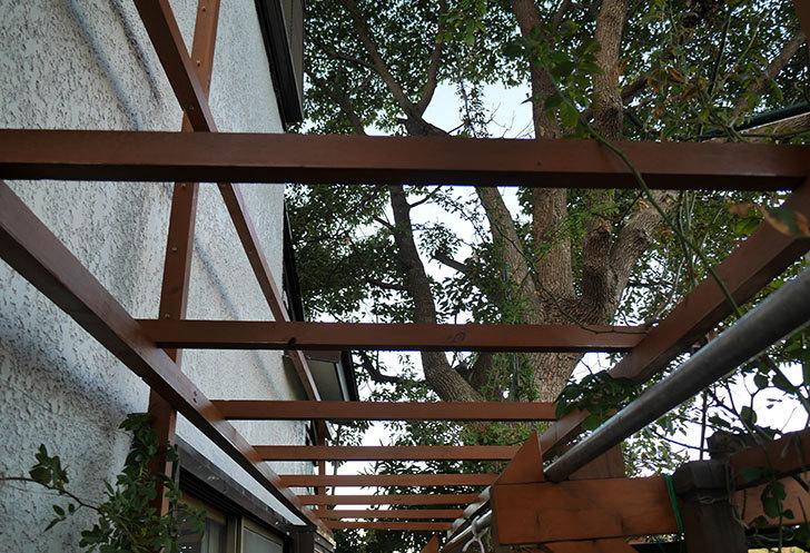 ツルバラの誘引を解いてパーゴラに木部保護塗料を塗った。2017年-1.jpg