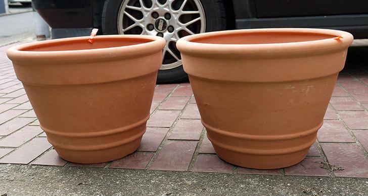 テラコッタの大きい鉢をケイヨーデイツーで買って来た1.jpg