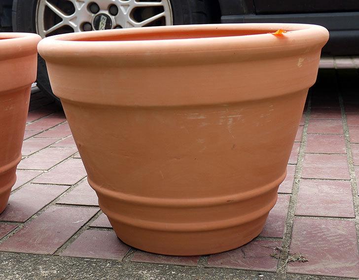 テラコッタの大きい鉢をケイヨーデイツーで買って来た2.jpg