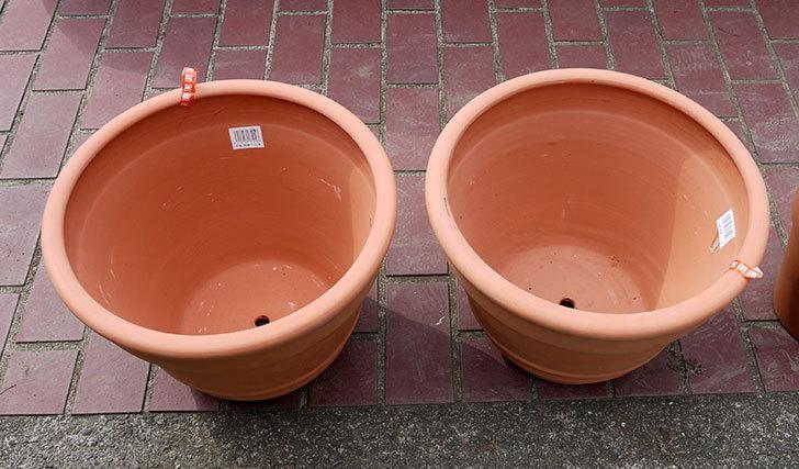 テラコッタの大きい鉢をケイヨーデイツーで買って来た3.jpg