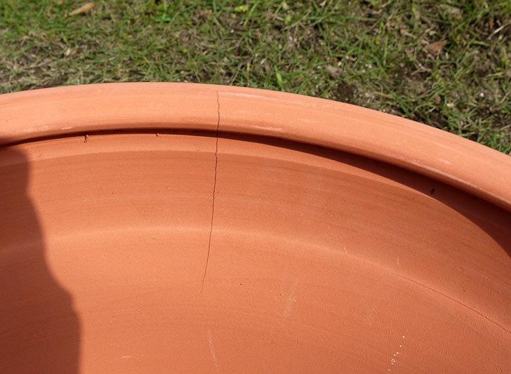 テラコッタの大きい鉢をケイヨーデイツーで買って来た6.jpg