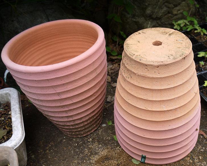 テラコッタ深鉢-26cmがカインズで半額だったので2個買って来た4.jpg