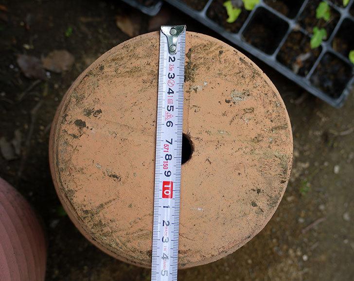 テラコッタ深鉢-26cmがカインズで半額だったので2個買って来た5.jpg