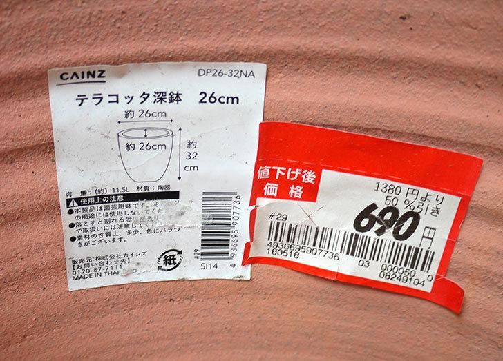 テラコッタ深鉢-26cmがカインズで半額だったので2個買って来た6.jpg