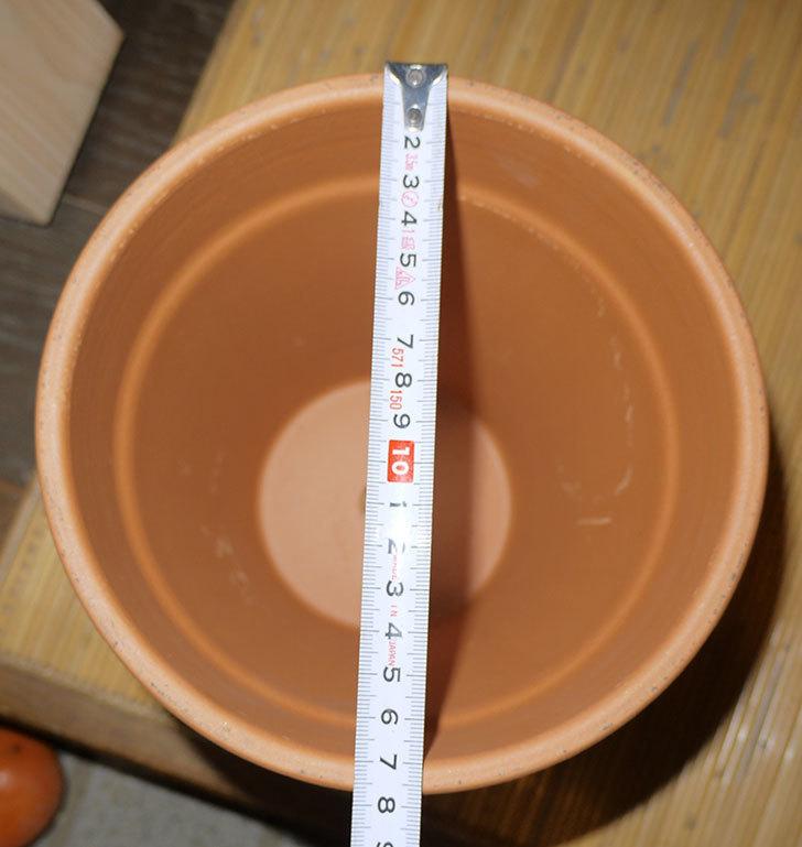デローマ-トールポット(DEROMA-vaso-alto-Art.0D-180SZ)18cm-(6号)がケイヨーデイツーで198円-4.jpg