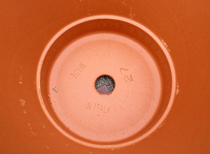 デローマ-バッサム(DEROMA-VASUM-Art.-50270SE)27cmをコメリで2個買った3.jpg