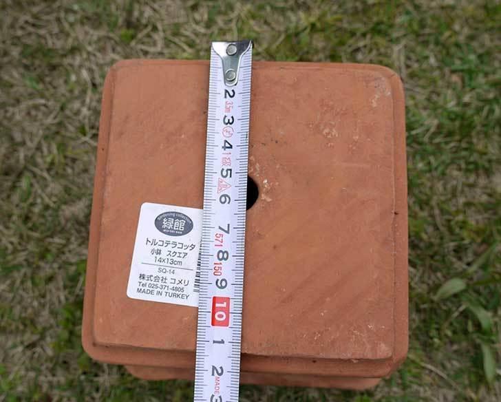 トルコテラコッタ-小鉢-スクエア-14×13をコメリで5個買った8.jpg