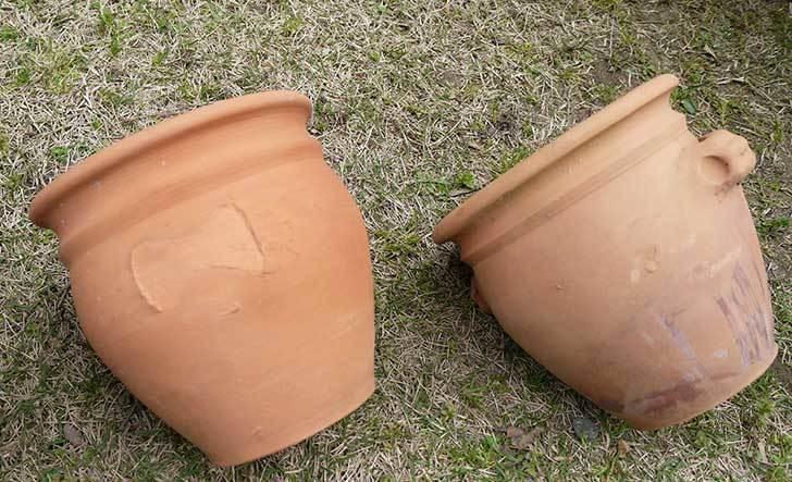 トルコテラコッタ-小鉢-プランター-21×16をコメリで5個買った7.jpg