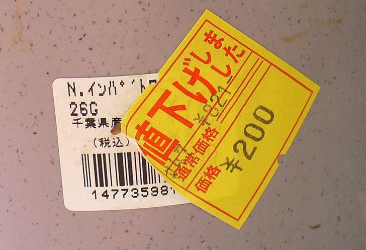 ニューギニアインパチェンスがホームズで200円だったので買って来た4.jpg