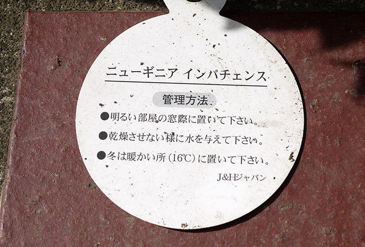 ニューギニアインパチェンスがホームズで200円だったので買って来た6.jpg