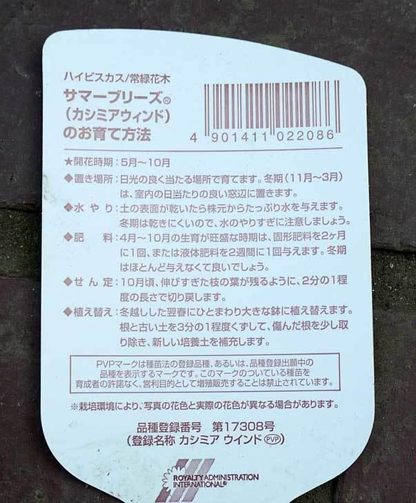 ハイビスカス-サマーブリーズ-カシミアウィンドがホームズで500円だったので買って来た3.jpg