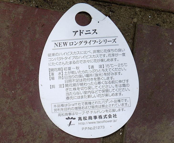 ハイビスカス-Newロングライフ・シリーズ-アドニスが380円だったので買って来た。2016年-4.jpg